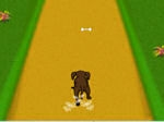 Gioco Dog Dash