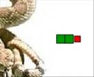 Gioco Il serpente