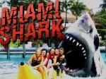 Gioca gratis a Miami Shark